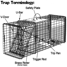 trap terminology
